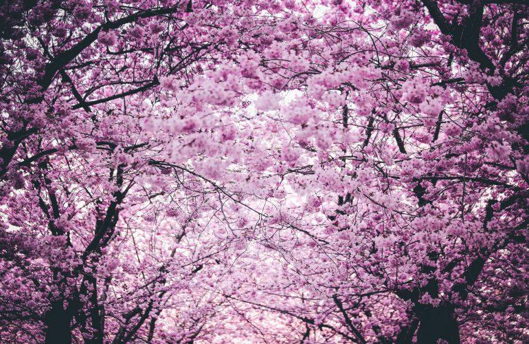jardim externo primavera